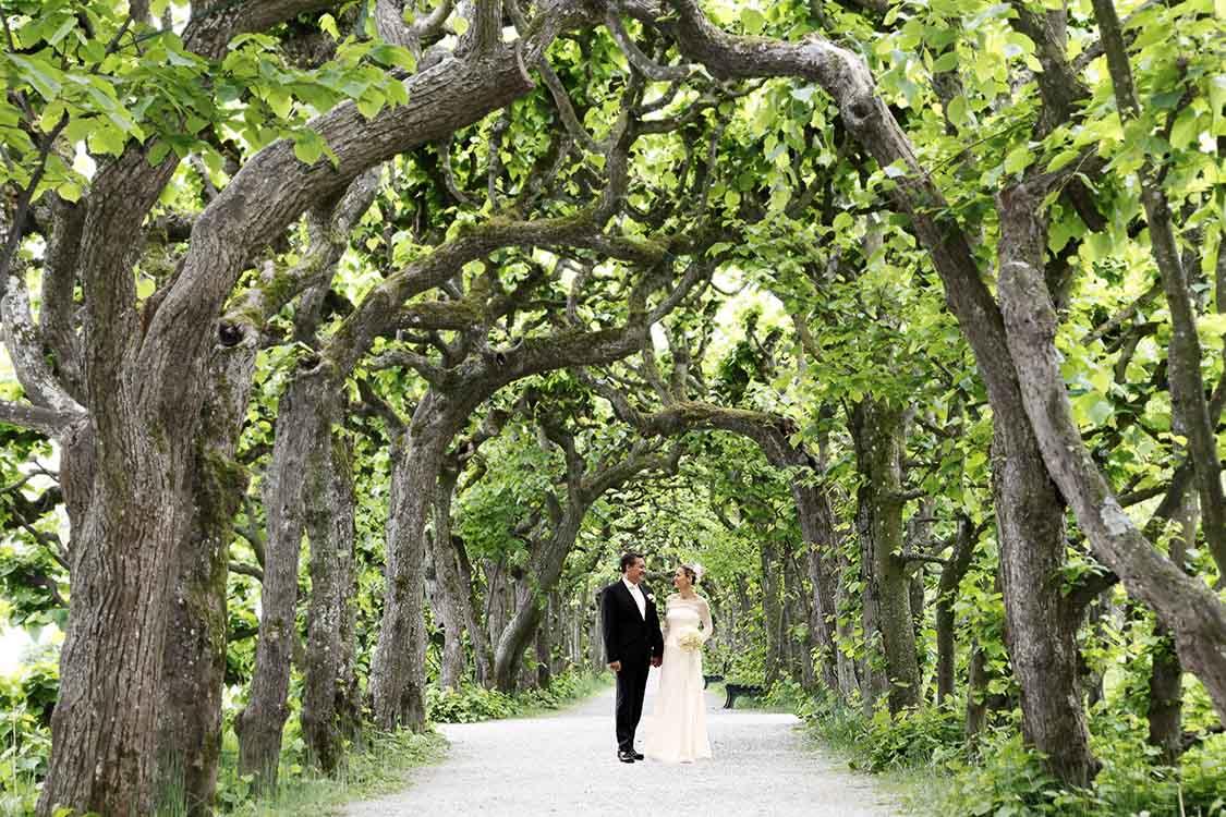 Hochzeitsfoto in einer Allee