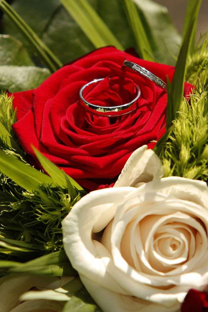 Eheringe auf einer roten Rose